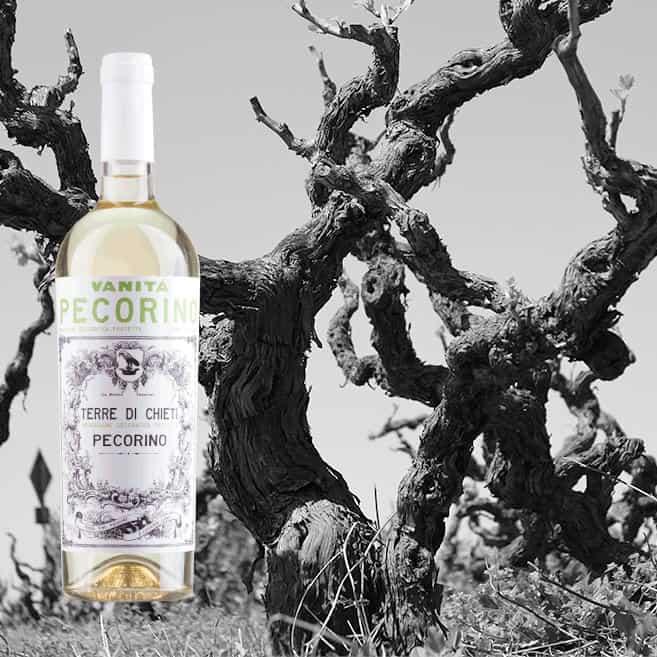 Alte Reben – junger Wein